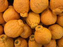 Mandarin Sumo Loose Orange Royalty Free Stock Images