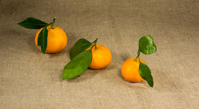 Mandarin on a table Stock Images