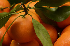 Mandarin or tangerin with green leaves Stock Photo