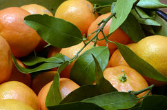 Mandarin or tangerin with green leaves Stock Photography