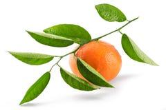 Mandarin (tangerin) som isoleras på vit bakgrund arkivfoto