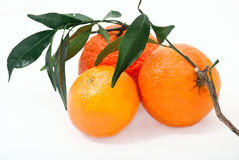 Mandarin. Tangerines with leaves Royalty Free Stock Image