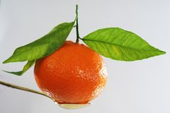 Mandarin with three leaves Royalty Free Stock Images