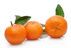 Mandarin tre Royaltyfri Bild