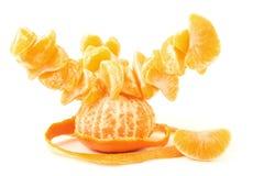 Mandarin tree. Creative mandarin tree isolated on white background Stock Image