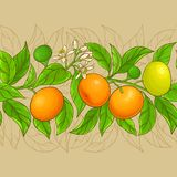 Mandarin vector pattern Stock Photo