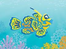 Mandarin Vissen Royalty-vrije Stock Afbeeldingen