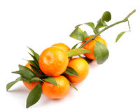 Mandarin on white Royalty Free Stock Photography