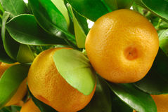 Mandarin With Leaves Royalty Free Stock Photography