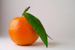 Mandarina con el primer de la hoja (2) Fotografía de archivo libre de regalías