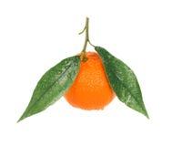 Mandarina con gotas del agua Fotos de archivo libres de regalías