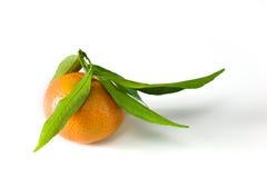 Mandarina con la hoja Fotografía de archivo