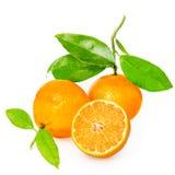Mandarina con segmentos foto de archivo