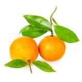 Mandarina con segmentos fotografía de archivo libre de regalías