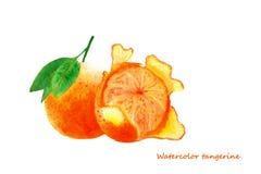 Mandarina de la acuarela Ejemplo aislado de los agrios Imagen de archivo