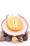 Mandarina en el shell del mar aislado Imágenes de archivo libres de regalías