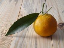 Mandarina en un vector Fotografía de archivo libre de regalías