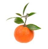 Mandarina fresca Imagen de archivo