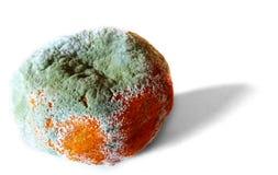 Mandarina putrefacta fotos de archivo libres de regalías