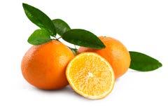Mandarinapelsin (tangerin) med sidor som isoleras på vit backg royaltyfri fotografi