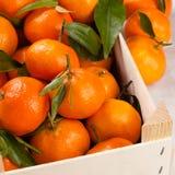 mandarinapelsiner Royaltyfria Foton