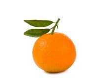 Mandarinas aisladas Fotos de archivo