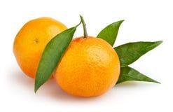 Mandarinas aisladas en el fondo blanco Imagenes de archivo