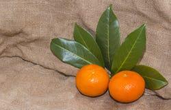 Mandarinas anaranjadas brillantes con las hojas verdes Imágenes de archivo libres de regalías
