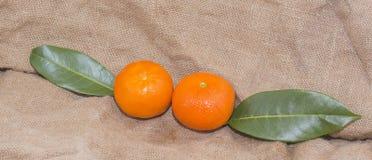 Mandarinas anaranjadas brillantes con las hojas verdes Fotos de archivo libres de regalías