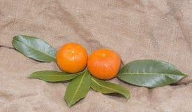 Mandarinas anaranjadas brillantes con las hojas verdes Fotografía de archivo