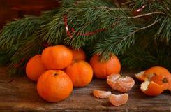 Mandarinas bajo rama del pino Foto de archivo