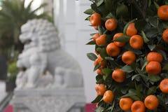 Mandarinas chinas del Año Nuevo, China Fotos de archivo