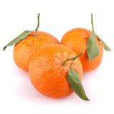 Mandarinas con las hojas aisladas en blanco Fotografía de archivo libre de regalías