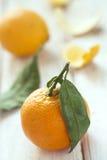 Mandarinas con las hojas verdes Fotos de archivo libres de regalías