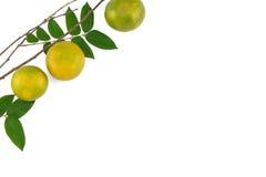 Mandarinas con las hojas verdes Imagen de archivo