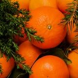 Mandarinas con las hojas y abeto en la decoración de la Navidad Visión superior Imagen cuadrada Invierno, Año Nuevo Imagen de archivo