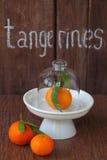 Mandarinas con los prospectos imagen de archivo