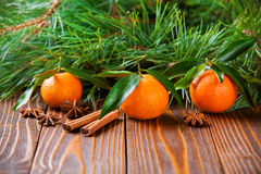 Mandarinas del día de fiesta con las ramas del abeto Imágenes de archivo libres de regalías
