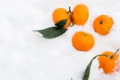 Mandarinas en el frío de la nieve foto de archivo