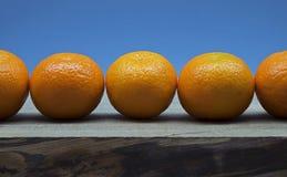 Mandarinas en línea y fondo azul imagen de archivo libre de regalías