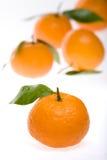 Mandarinas en la tierra de la parte posterior del blanco Fotografía de archivo libre de regalías
