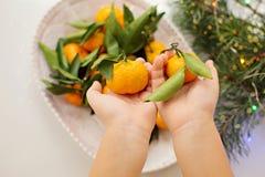 Mandarinas en manos del ` s de los niños fotos de archivo libres de regalías