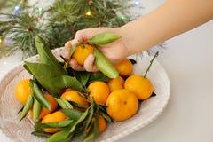 Mandarinas en manos del ` s de los niños en una placa blanca fotografía de archivo