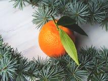 Mandarinas frescas en el tablero rústico blanco Fotos de archivo libres de regalías