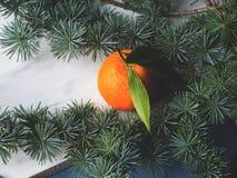 Mandarinas frescas en el tablero rústico blanco Imágenes de archivo libres de regalías