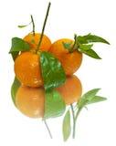 Mandarinas jugosas (aisladas) Fotografía de archivo