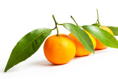 Mandarinas maduras con las hojas Foto de archivo libre de regalías