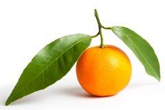 Mandarinas maduras con las hojas Fotos de archivo libres de regalías