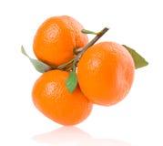 Mandarinas maduras con las hojas aisladas en blanco Fotografía de archivo libre de regalías