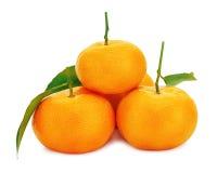 Mandarinas maduras frescas con las hojas verdes aisladas en el backgr blanco Imágenes de archivo libres de regalías